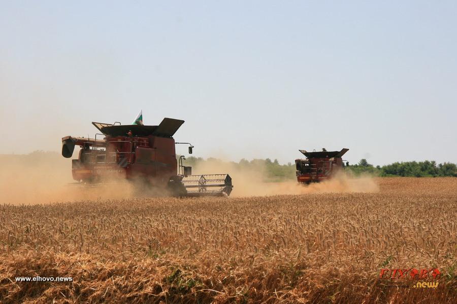 Средният добив от пшеница в област Ямбол по-добър от 2020 год.